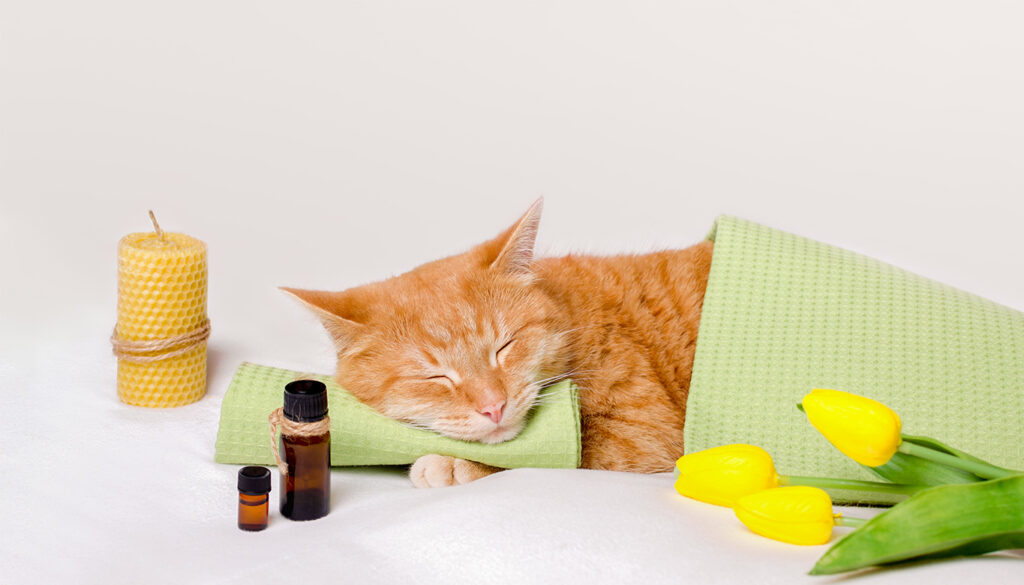 Homeopatia Veterinária. Você conhece?
