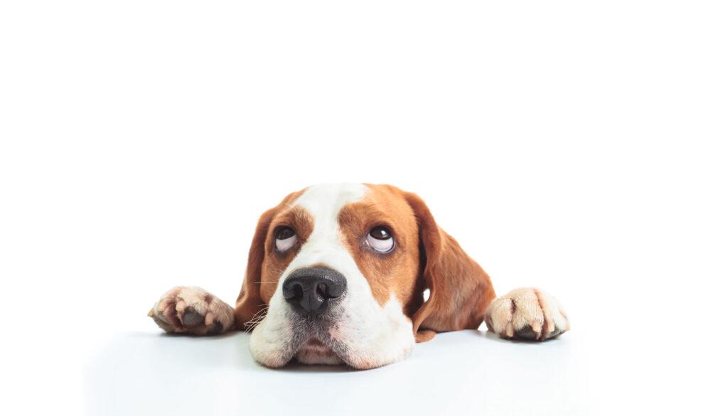 6 fatos sobre a homeopatia veterinária